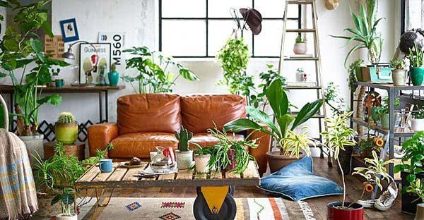 観葉植物は西海岸風のお部屋に欠かせないアイテム